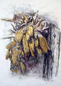 giovanni ferri, terni, mazzi di mais, china su carta, 50 x 70 cm